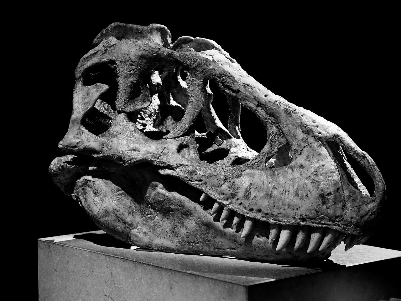 Bande annonce de Jurassic World 2 enfin disponible !